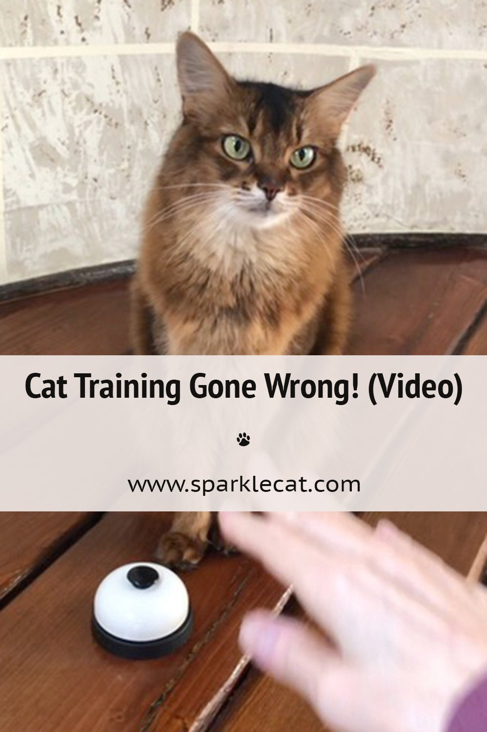 I Forgot How to Ring a Bell! (Video)