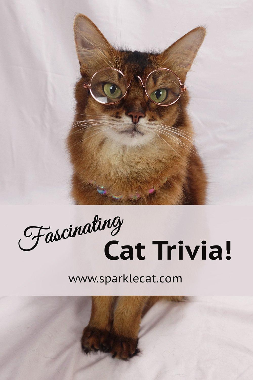 Fun and Fascinating Cat Trivia