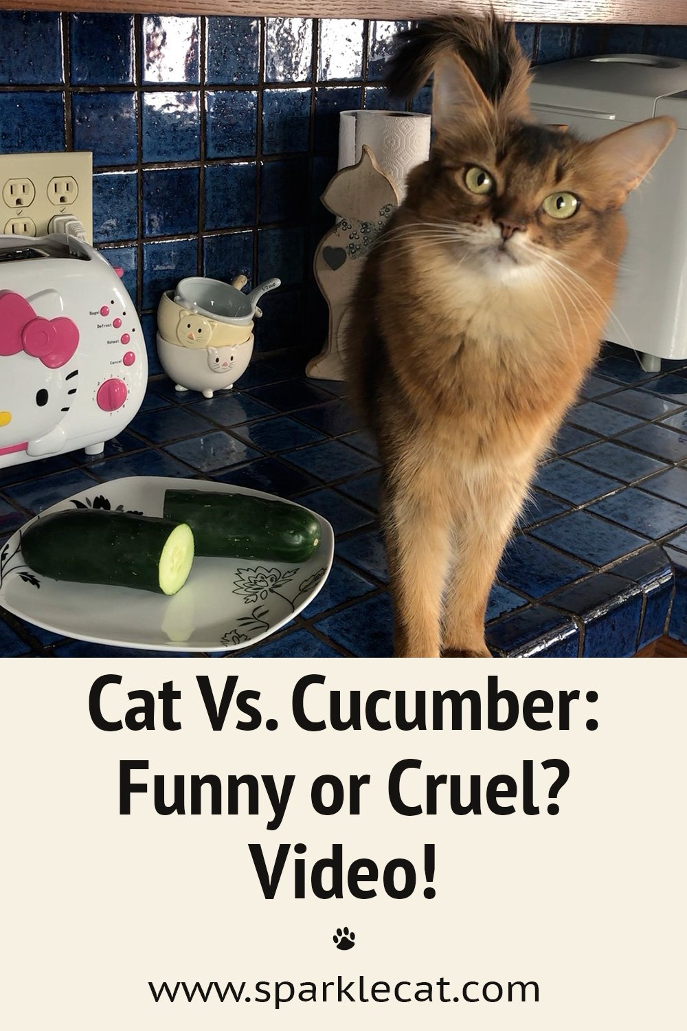 Is Cat Vs. Cucumbers a Cruel Meme?