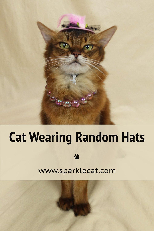Random Cat Hat Practice