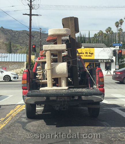The cat tree truck makes another appearance