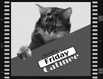 Catinee SPECIAL: It's Black Cat Friday!