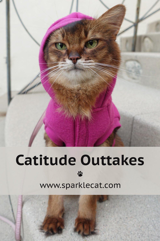 Cattitude Outtakes