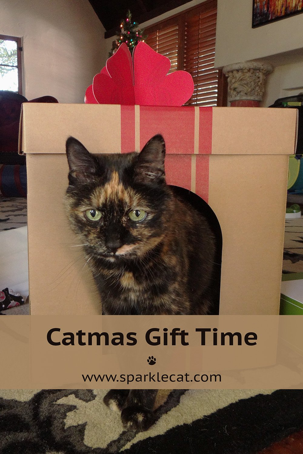 Caturday Catmas Gifts