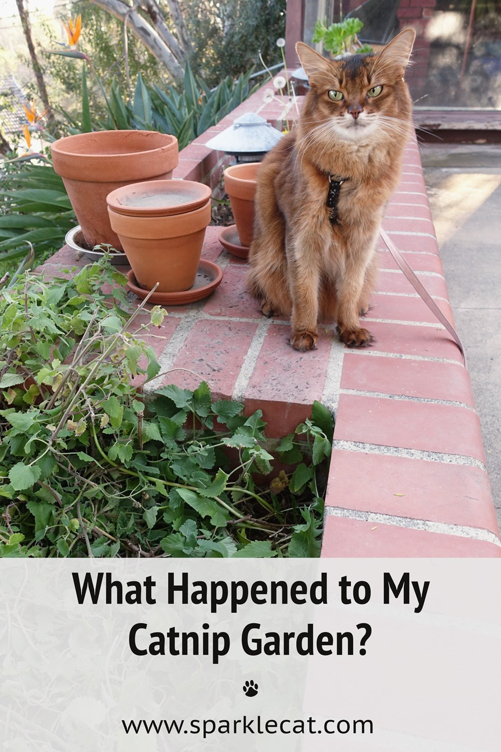 What Happened to My Catnip Garden?