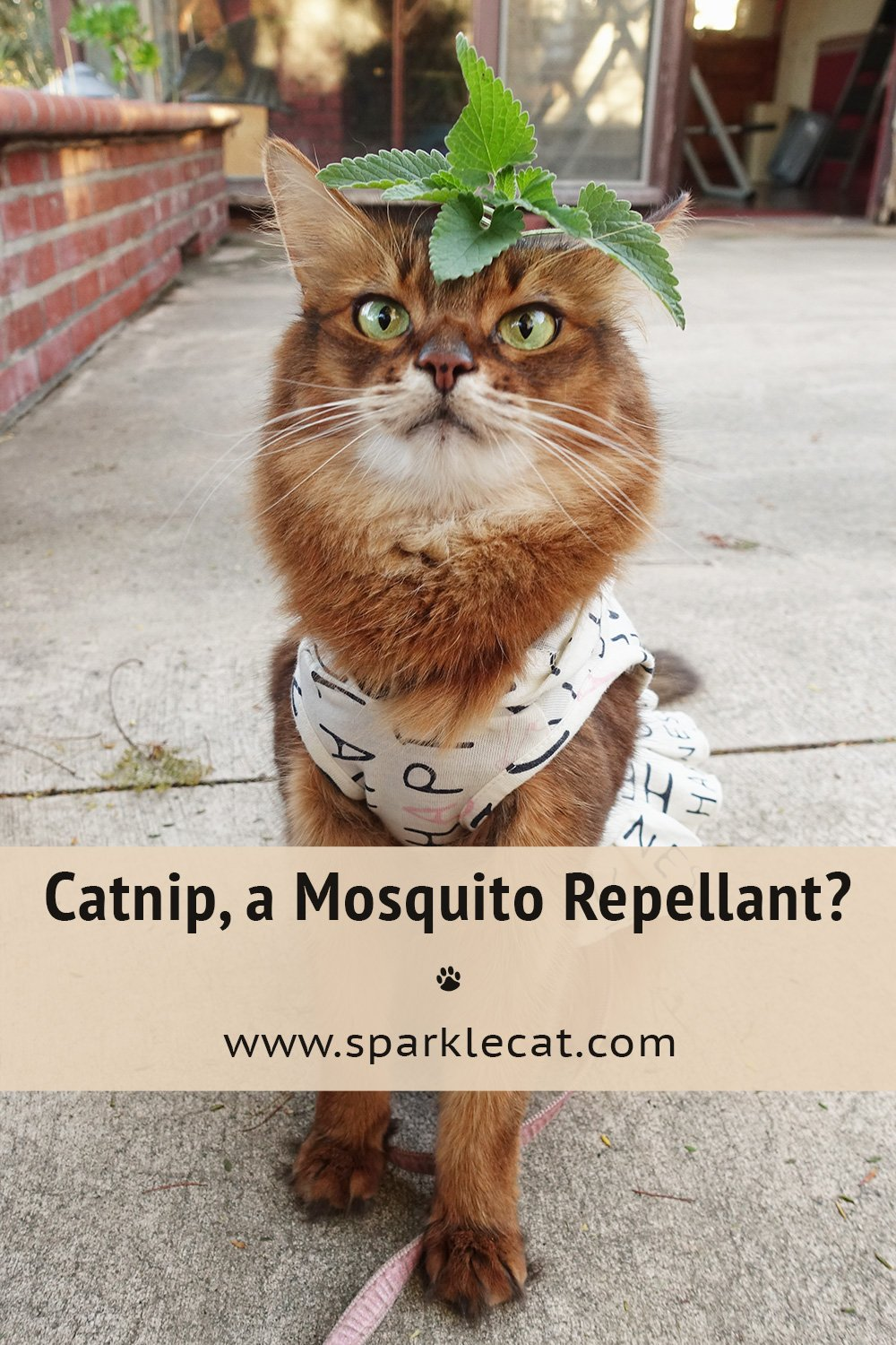 Is Catnip a Mosquito Repellant? Wow!