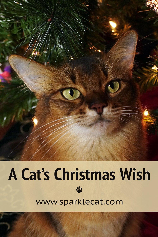 My Christmas Wish for You