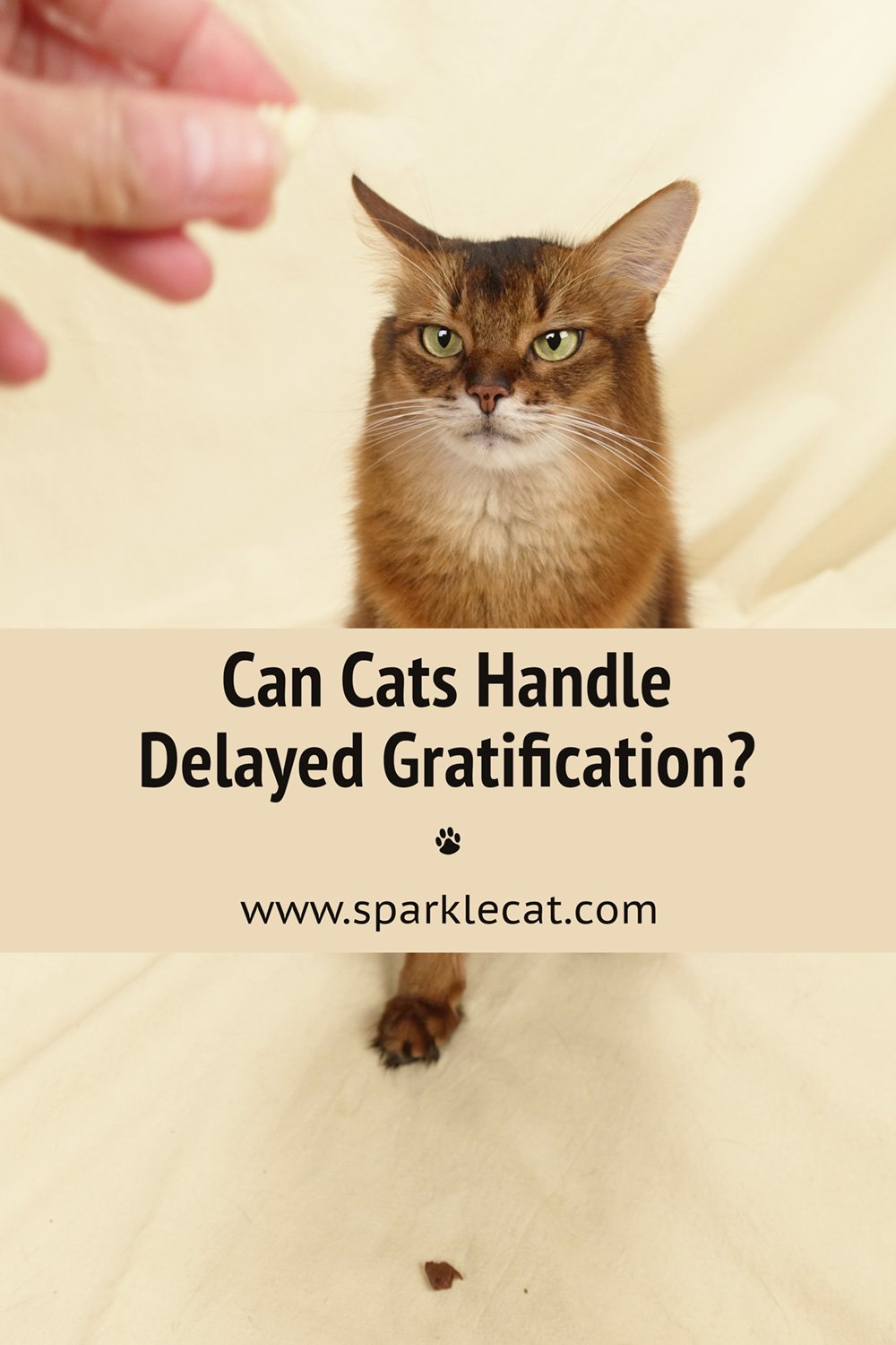 Are Cats as Smart as Cuttlefish... or Preschoolers? An Experiment on Delayed Gratification