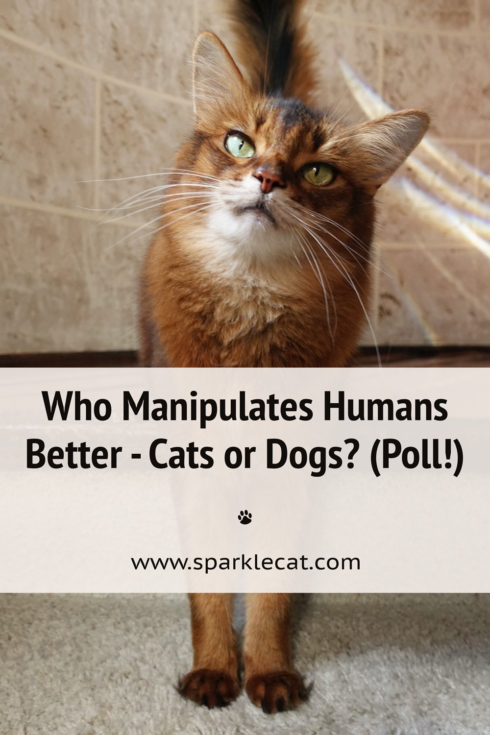 Who Is Better at Human Manipulation - Cats or Dogs? (Poll!)
