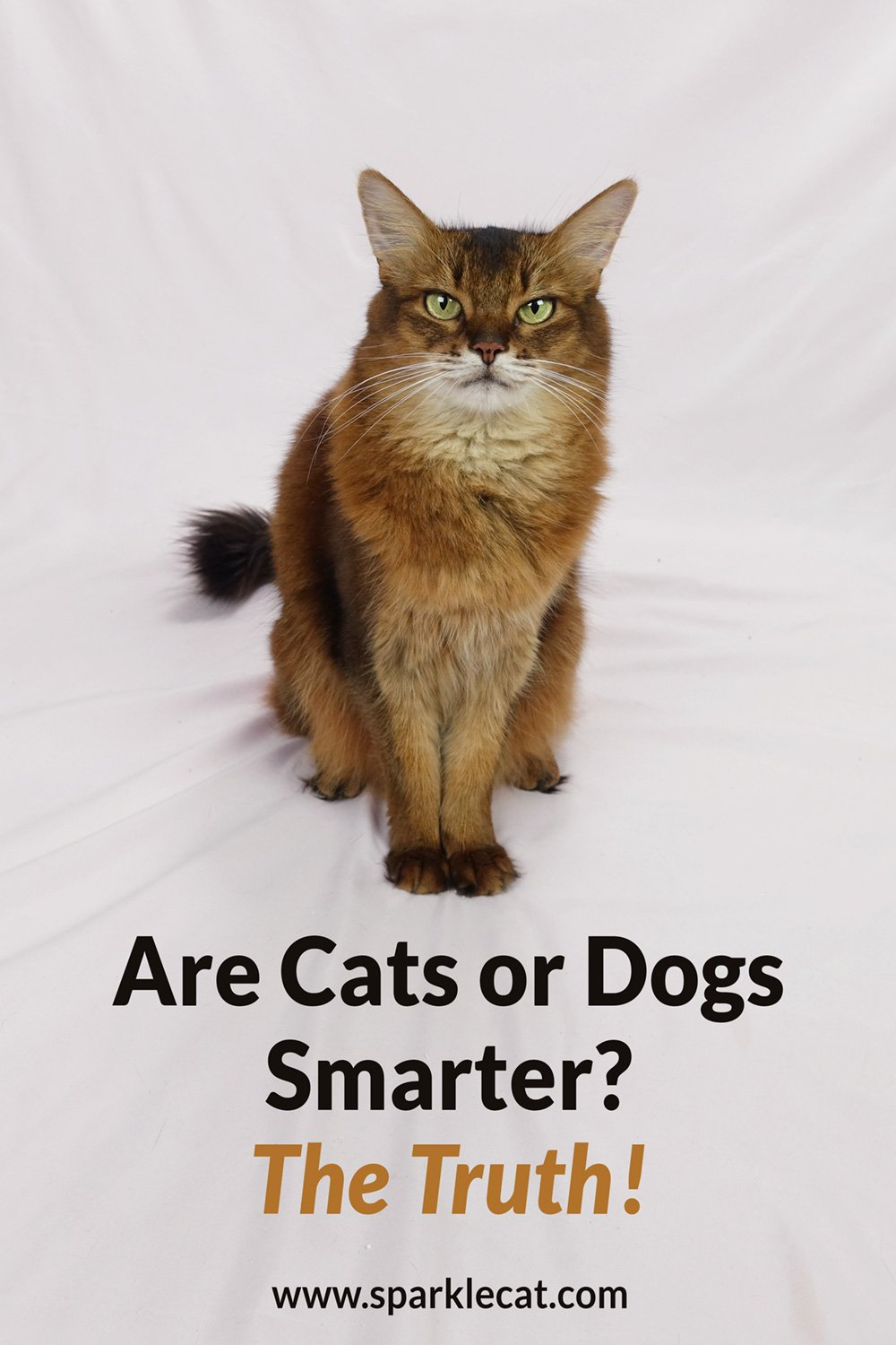 Who's Smarter, Cats or Dogs? The Final Word