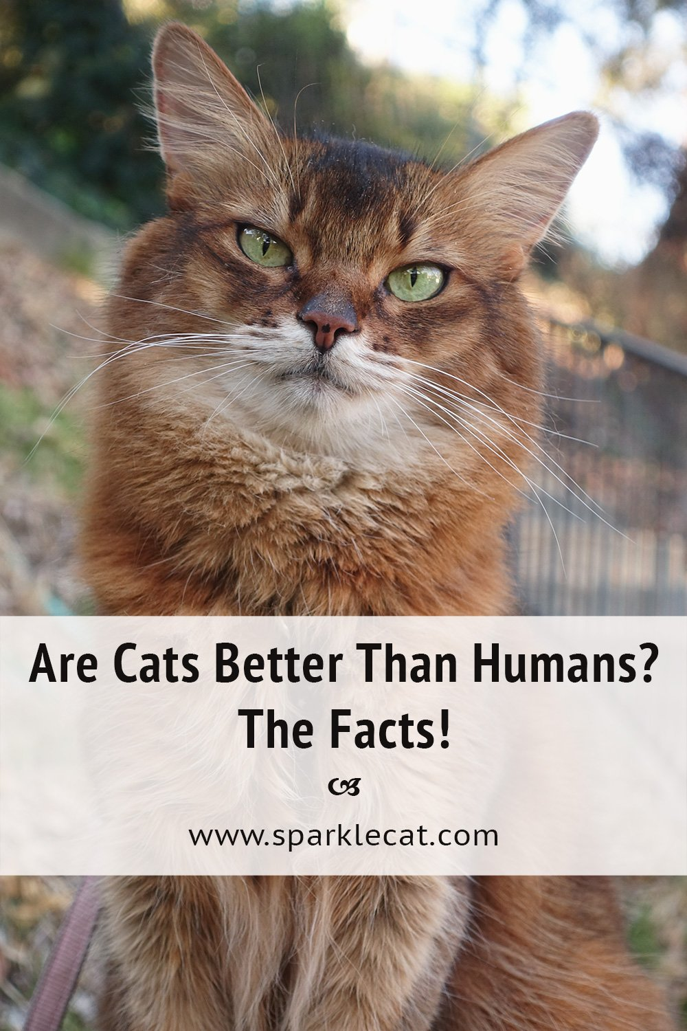 Cat Facts Vs. Human Facts: Who Wins?