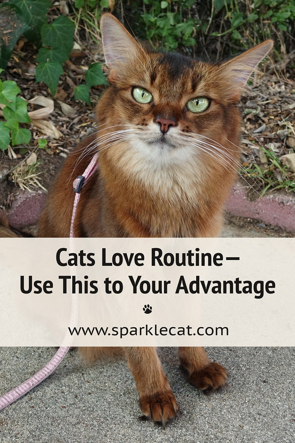 How to Work With Your Cat\'s Love of Routine