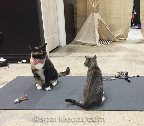 two feisty cats on a yoga mat