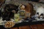 cats enjoying Cat World Domination Day 2015