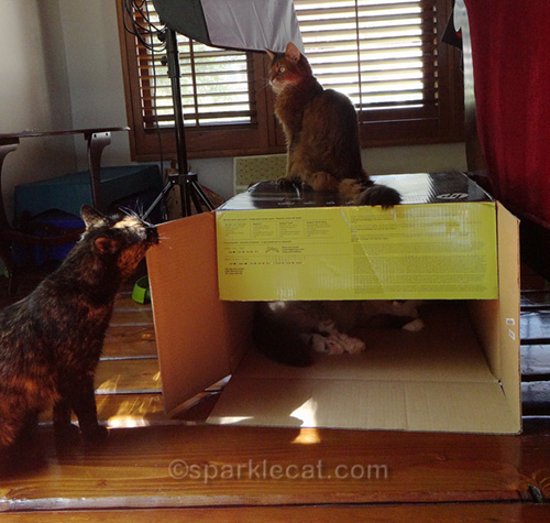 sparkle binga and boodie with a big box