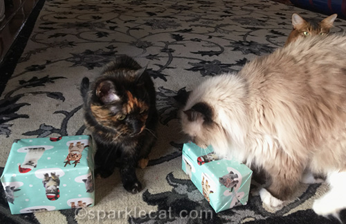 tortoiseshell cat and ragdoll cat with presents