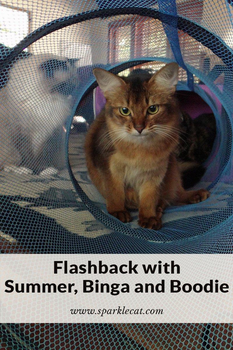 Caturday Flashback Featuring Binga and Boodie