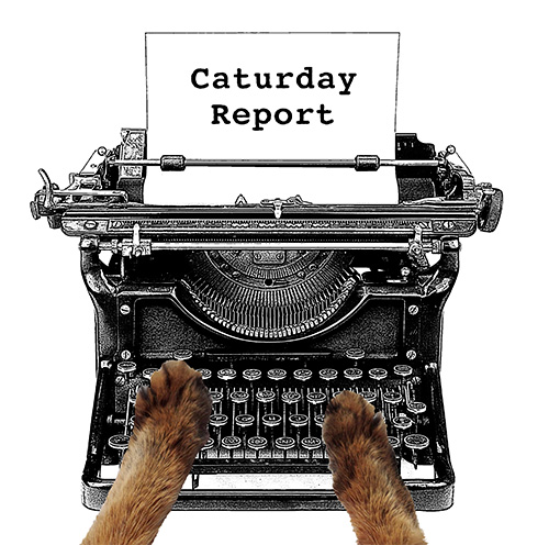 The Caturday Report