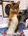Crazy Cat Show Kitten Capers