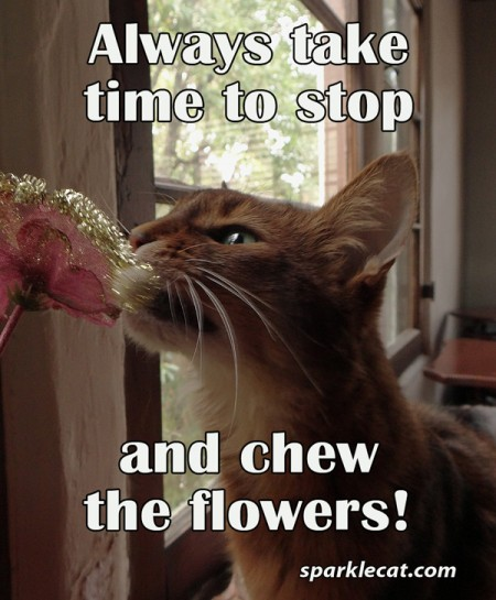 Always take time to stop and chew the flowers!