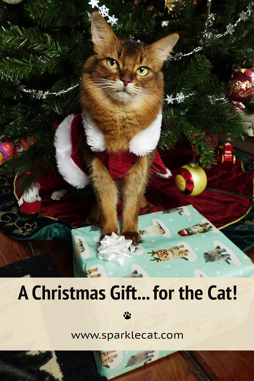 A Christmas Gift... for ME?