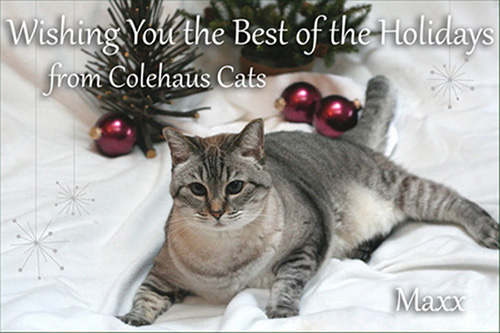 The Colehaus Cats