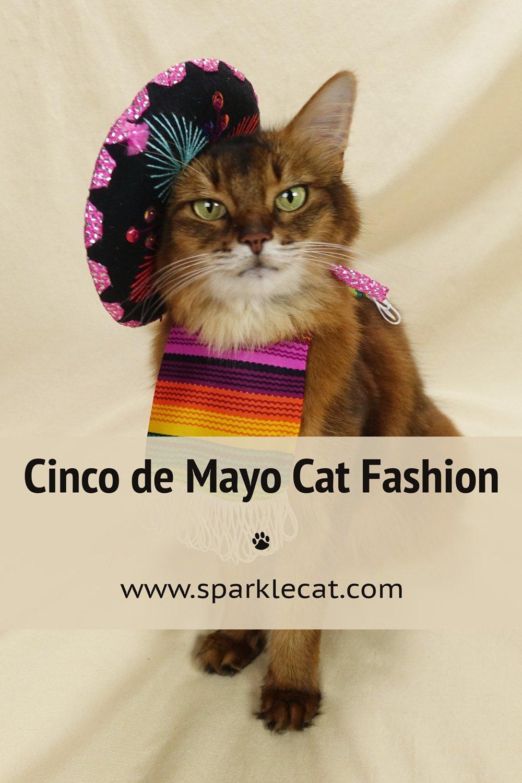 CATro de Mayo Outfits