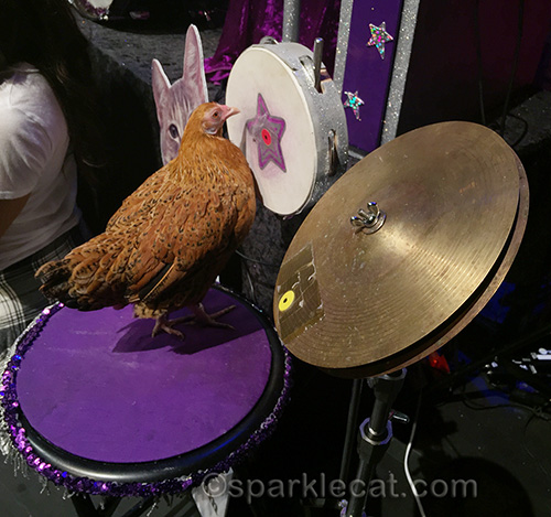 Cluck Norris of the Rock Cats playing percussion