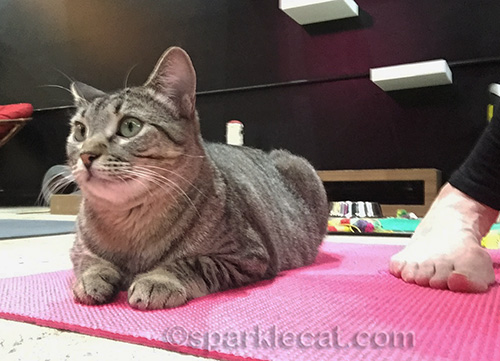 tabby cat on pink yoga mat by human foot