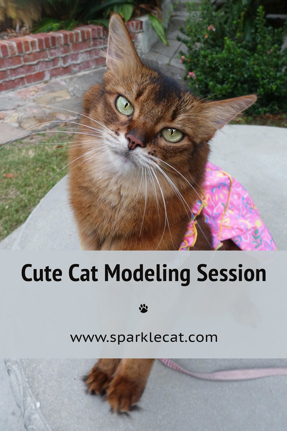 A Caturday Modeling Session