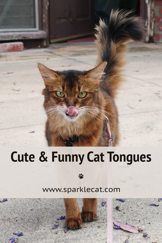 Cat Tongue Tuesday