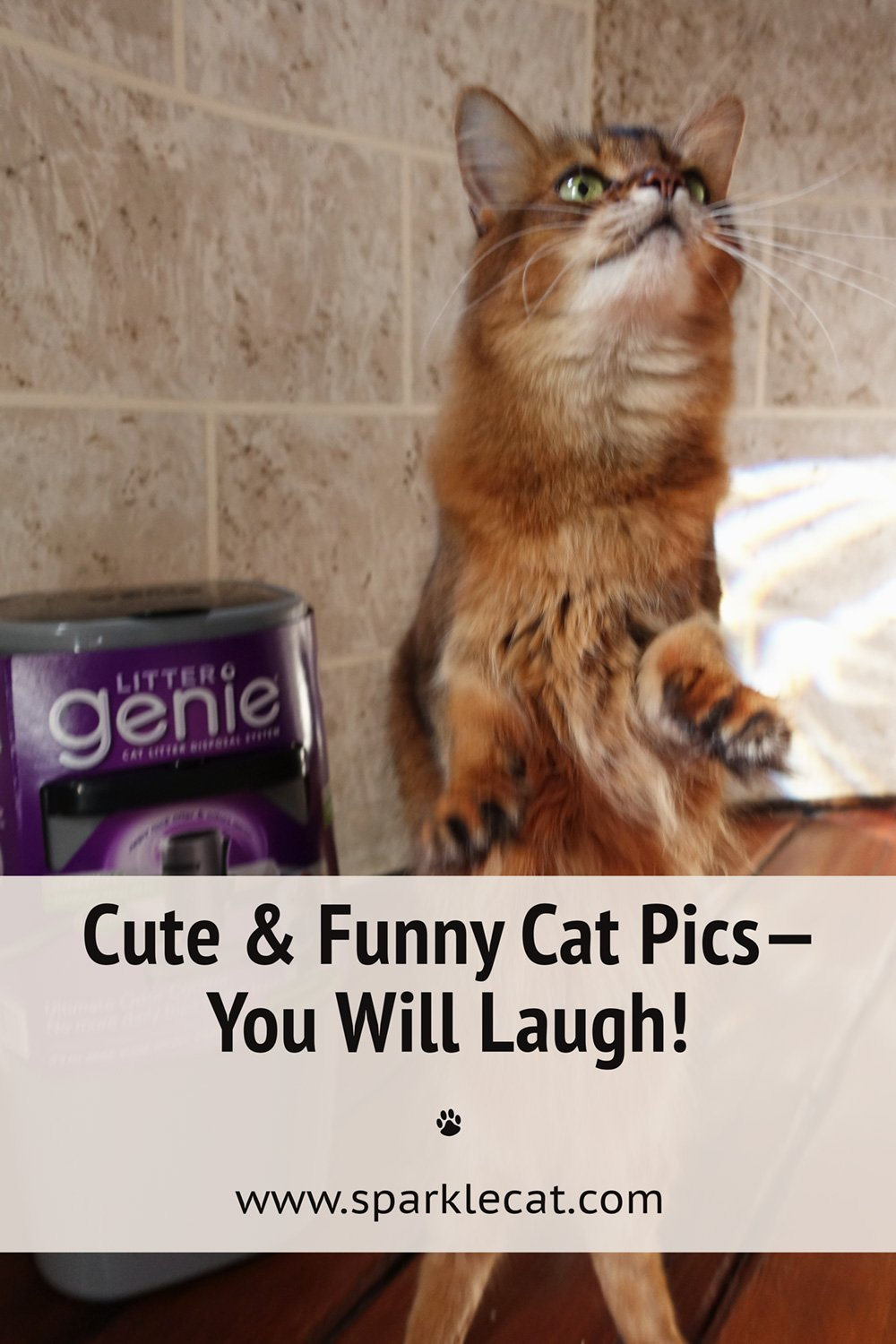Fun Cat Modeling Outtakes