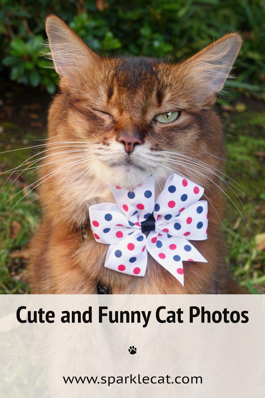 The Sunday Funny Photos