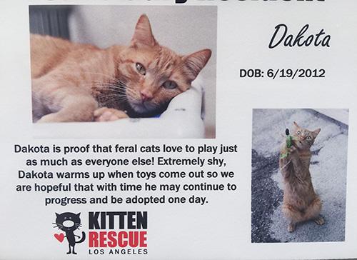 Dakota's information sheet at Kitten Rescue