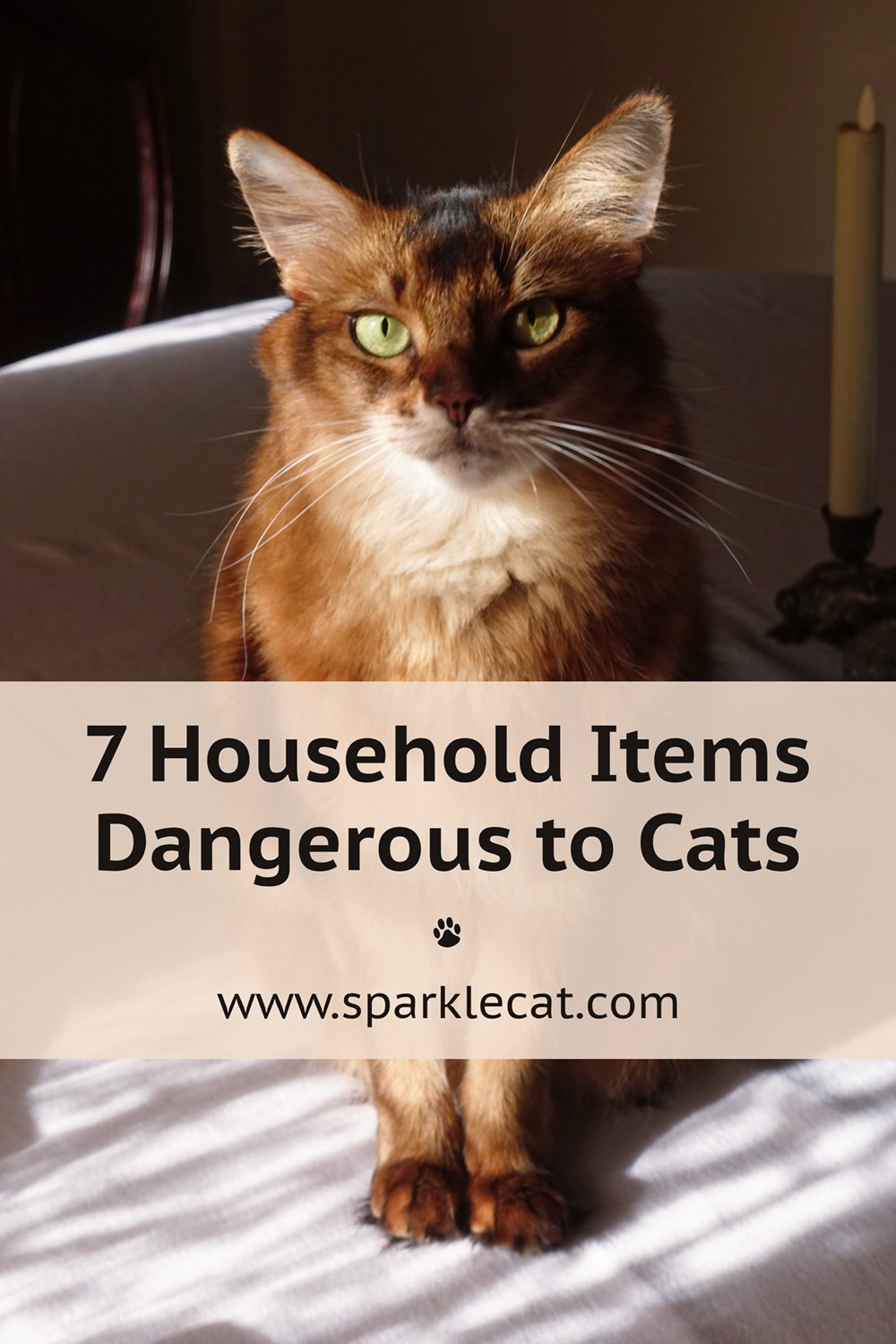 7 Household Items Dangerous to Cats
