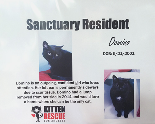 Kitten Rescue information card for Domino