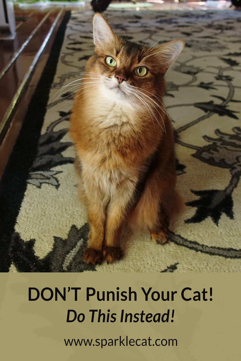 Punish a Cat? Never! How to Avoid Ruining Your Relationship With Your Kitty