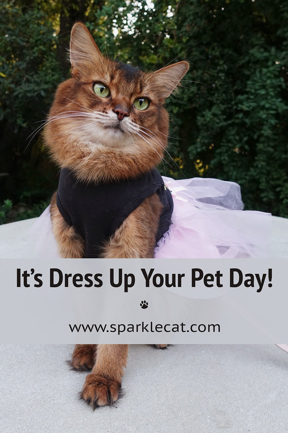 Boringest Dress Up Your Pet Day Ever