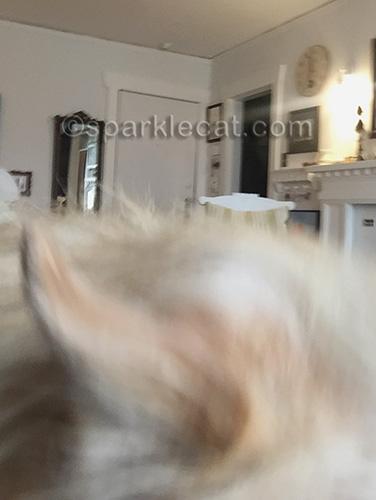 little dog ear selfie