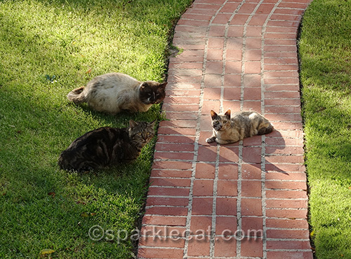 feral cats in front yard
