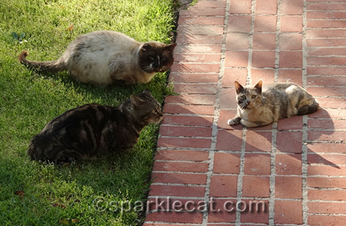 feral cats having a pow-wow