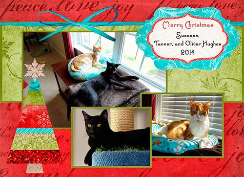 Four Crazy Cats Blog