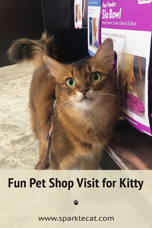 My Busy Pet Shop Visit