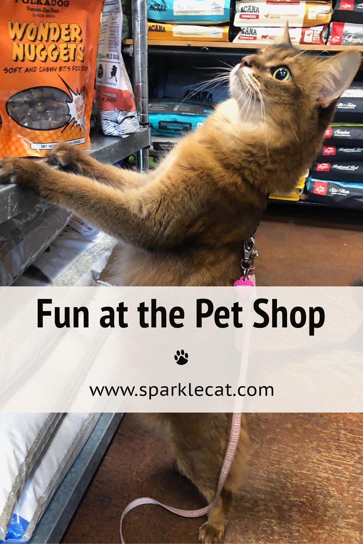 Fun at the Pet Shop