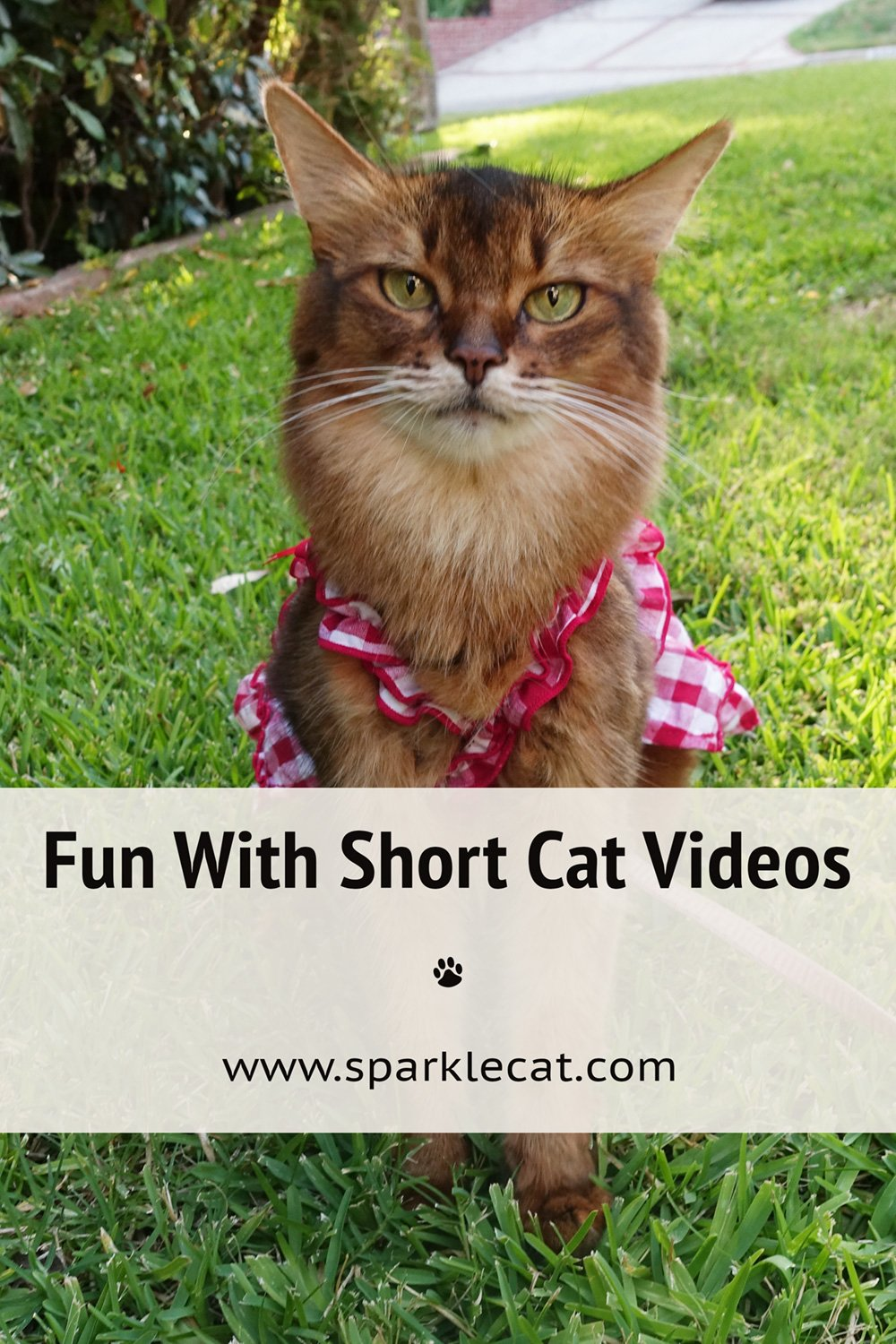 Caturday Flashback, With Video