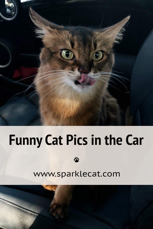 Crazy Cat Car Pics