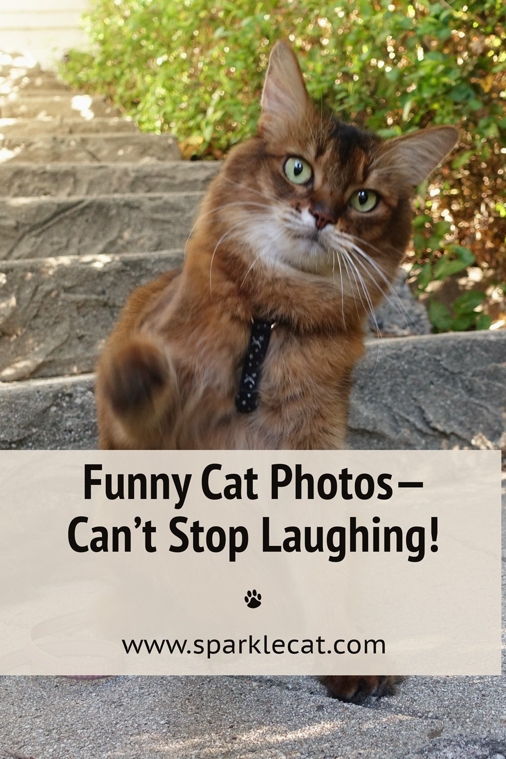 Funny Photo Fails From Recent Shoots