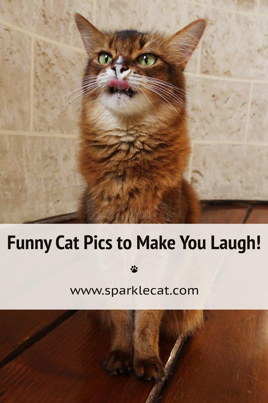 Silly Sunday Photos