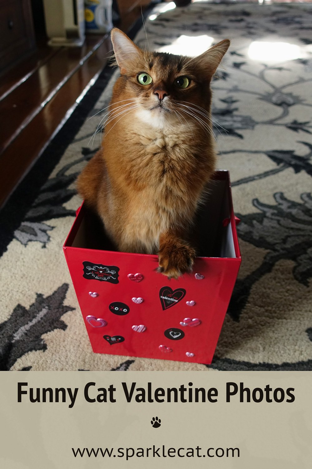 Funny Outtakes From Valentines Past