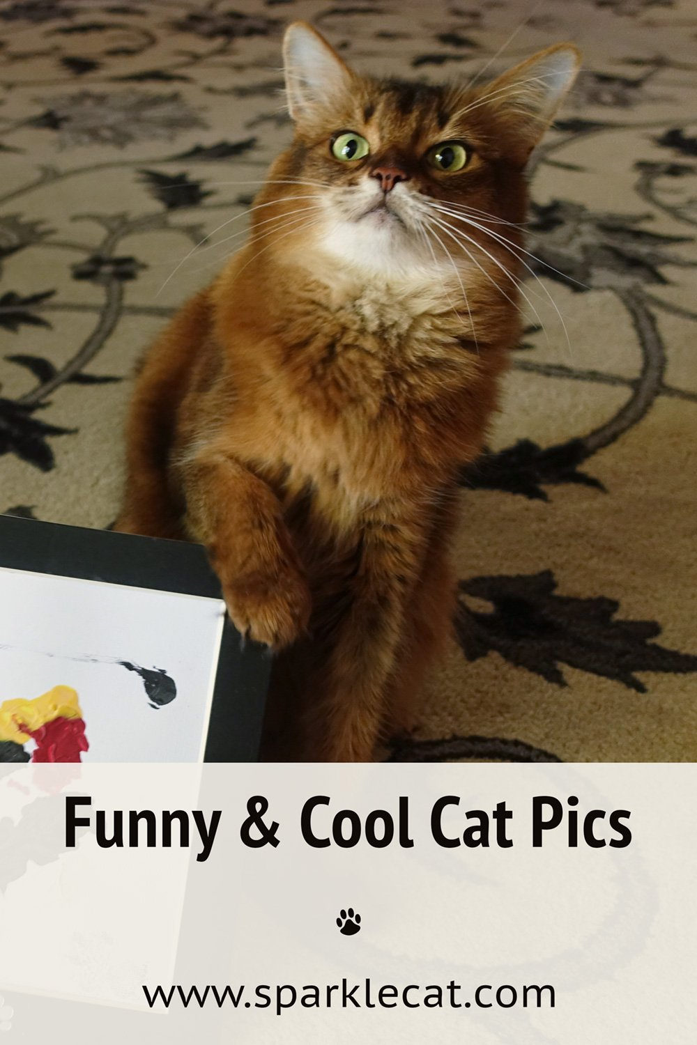 Funny and Cool Photos